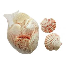 Filet de 150g de coquillages