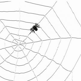 Toile d'araignée + araignée 2m